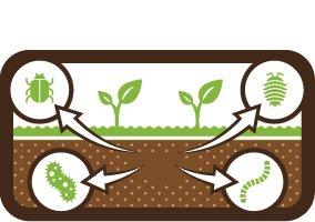 Loss of Soil Biodiversity